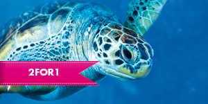 Turtle from the London Aquarium with 2 for 1 entry when you travel by rail
