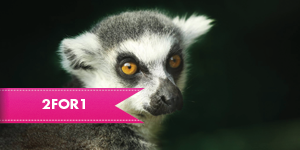 ZSL London Zoo with 2for1 entry when you travel by rail