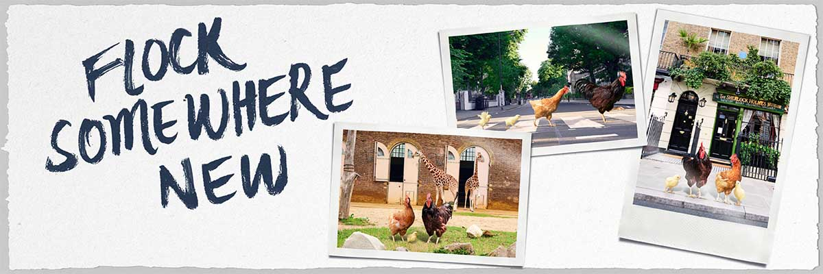 Flock somewhere new with a Family Travel Card with Chiltern Railways