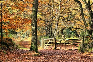 Flock to Saunderton for a beautiful Autumnal walk