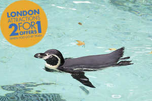 Head to ZSL London Zoo with Chiltern Railways