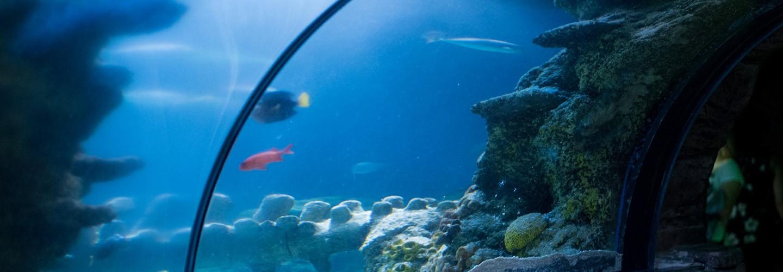 Image of a fish tank in the Aquarium