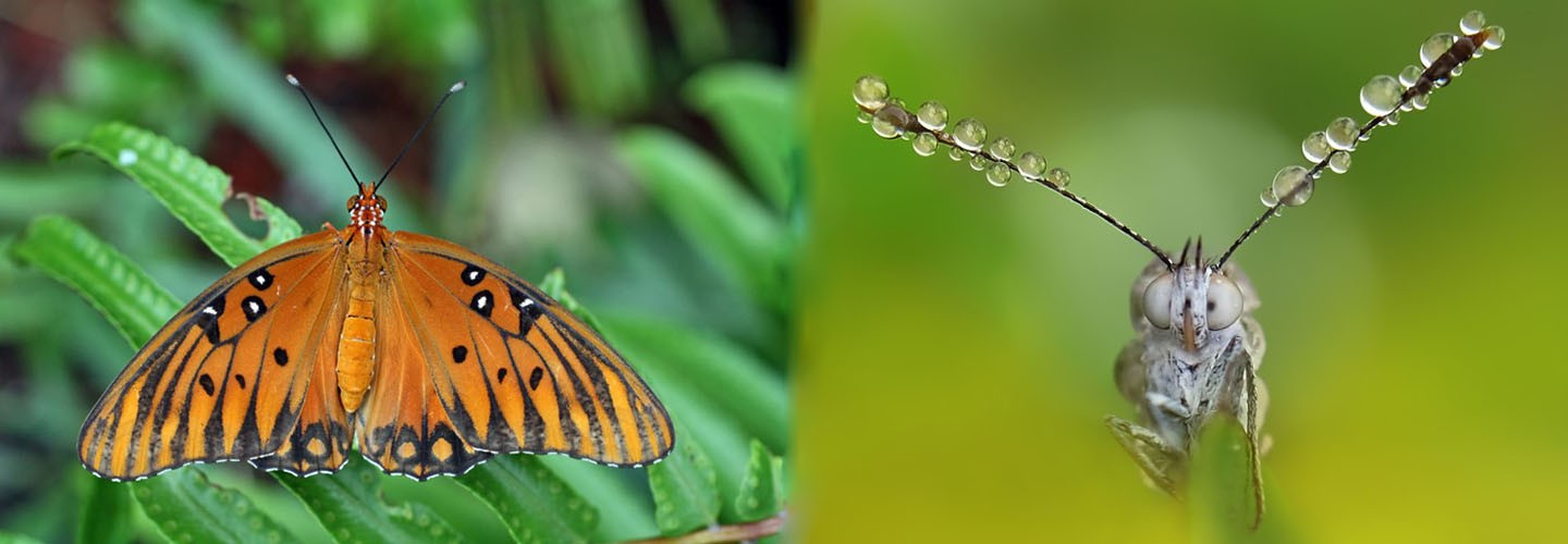 Flock to the Butterfly Farm with Chiltern Railways
